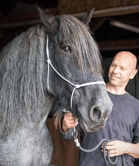 Jouw paard in de stijl van de oude meesters - MvH Fotografie, fotograaf in Hellevoetsluis
